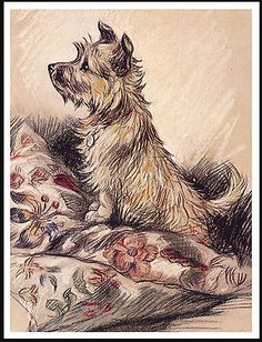 Dog Collectables Cairn Terrier Little Dog On Cushions Charming Mounted Dog Print Ready To Frame Norfolk Terrier, Norwich Terrier, Pitbull Terrier, Cairn Terriers, Terrier Dogs, Boston Terriers, Cairns, Little Dogs, Yorkshire Terrier