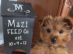 Down to Earth Style: Personalized Pet Food Bin