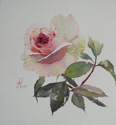 Watercolor Rose, Watercolor Paintings, Watercolours, Rose Sketch, Collage Design, Watercolor Techniques, Art Blog, New Art, Drawings