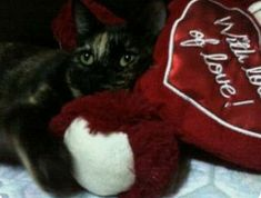 will you be my Valentine? Valentines Day Cat, Be My Valentine, Get Well Wishes, Cat Boarding, Cat Love, Birthday Wishes, Cats And Kittens, Cute Cats, Kitty