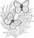 Butterfly Coloring Pages | Purple Kitty
