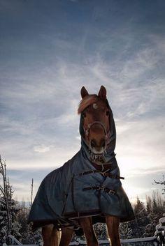 #Equstom #hevoset #horses