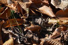 Garter Snake (Audubon Center, Mill Grove, PA)