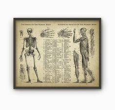 Bones And Muscles Of The Human Body Antique by QuantumPrints