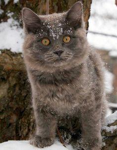 Winter adventure.
