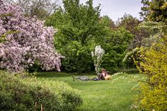 The Buda Arboretum is at the South foot of Gellért Hill; today it is a conservation area and a university campus – we could say it is the Füvészkert of Buda. Plant Sale, Botanical Gardens, Budapest, Conservation, Garden Tools, 19th Century, Golf Courses, Dolores Park, Country Roads