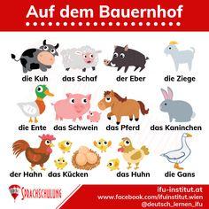 Deutschlernen in Wien German Grammar, German Words, German Language Learning, English Language, Deutsch Language, Study German, Germany Language, All Languages, Grammar And Vocabulary