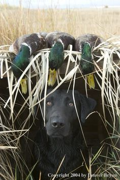 Duck hunting - that's a beautiful dog!