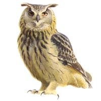 Vogelgids | Vogelbescherming.nl