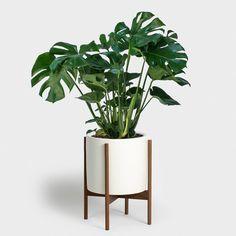 indoor plants in pots for your home Bathroom Red, Bathroom Plants, Natural Bathroom, Monstera Deliciosa, Hanging Plants, Indoor Plants, Diy Hanging, Hanging Baskets, Ivy Plants