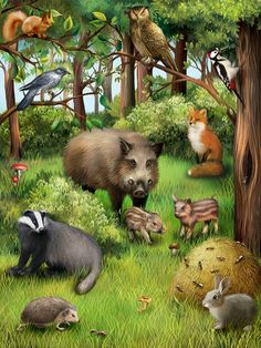 Waldtiere tags and prints animals, animal paintings и wildlife paintings. Wildlife Paintings, Wildlife Art, Animal Paintings, Animals And Pets, Baby Animals, Funny Animals, Cute Animals, Forest Animals, Woodland Animals
