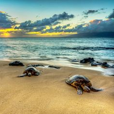 Baby Sea Turtles, Small Turtles, Olive Ridley, Turtle Love, Wild Creatures, Tortoises, Under The Sea, Animal Pictures, Swimming