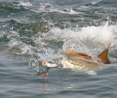 Best Fishing Lures for Redfish Sport Fishing Magazine Saltwater Fishing Gear, Best Fishing Lures, Trout Fishing Tips, Sport Fishing, Kayak Fishing, Fishing Knots, Catfish Fishing, Ice Fishing, Fishing Tricks