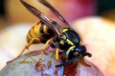Plants That Keep Wasps Away (with Pictures) | eHow