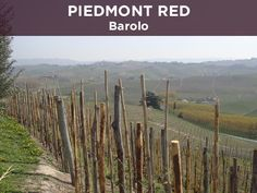 One of the world's greatest red wines is Barolo, made from Nebbiolo grapes in Italy's Piedmont. Learn about the region and the wine.