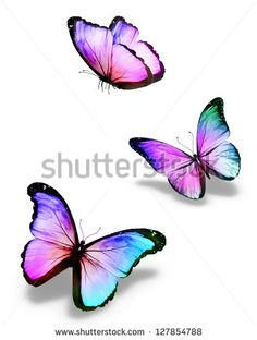 Three color butterflies, isolated on white