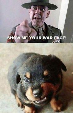 puppy war face