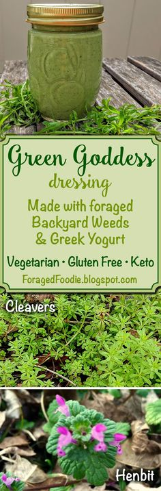 Backyard weed Green Goddess dressing with Greek yogurt. Gluten free and keto. Recipe made with foraged cleavers and henbit. From the #ForagedFoodie