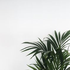Perfect Aesthetic Minimalist Aesthetic Minimalist 34 Images About Minimalist Aesthetic On We Heart It See More About Plant Aesthetic, Nature Aesthetic, White Aesthetic, Lightroom, Plant Wallpaper, Minimalist Wallpaper, Minimalist Phone, Rosa Rose, Nature Plants