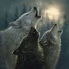 """nature.geography: """"Follow @wildlifeplanet for more amazing wildlife and animal photos&videos Wolf 