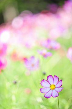 Delicate floral images / bokeh / meadow of flowers Love Flowers, My Flower, Flower Power, Wild Flowers, Beautiful Flowers, Happy Paintings, Flower Seeds, Bokeh, Mother Nature