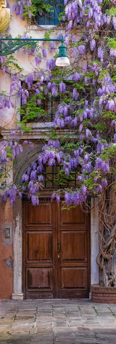 Wisteria in Venice, Italy by Peter Lik Photography Beautiful Flowers, Beautiful Places, Beautiful Gifts, Peter Lik, Dame Nature, Old Doors, Doorway, Entrance, Garden Design