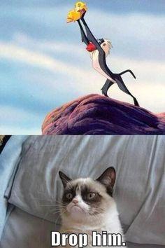 Gotta love the grumpy cat :)
