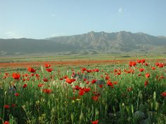Travel to Armenia - a country of incredible landscapes, rich history, the beauty of nature