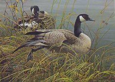 Robert Bateman Preening Canada Geese