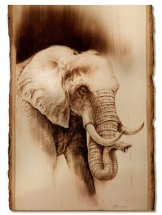 Wood Burned Elephant by Dennis Franzen