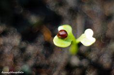 Close Up, Nature, Naturaleza, Nature Illustration, Off Grid, Natural