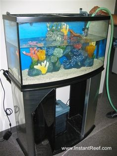 One of the most essential things you can do for your for How do you clean a fish tank