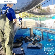 It's meal time for the hungry sea lion pups in SeaWorld San Diego's rescue facility. #365DaysOfRescue