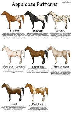 Equine Colors- Appy Patterns by ~Kholran on deviantART