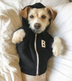 monogrammed dog hood