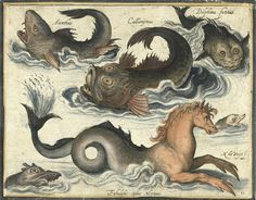 Zwierzęta morskie /Acanthus, Callionymus, Delphinus fictitius, Fabulosus equus Neptuni/ (Nicolaes de Bruyn, XVII w., RMA)(960×749)