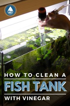 Fish Tank Cleaning, Deep Cleaning, Freshwater Sharks, Aquarium Maintenance, Diy Aquarium, How Do You Clean, Hard Water Stains, Water Spots, Cleaning Solutions
