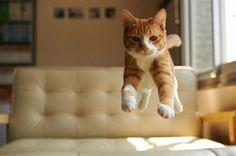 Cat in mid-air - Imgur