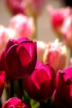 what a colour woooowww.... photo by Kuuka