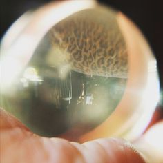 The future always has #leopardprint  #crystalball #magick #scrying #reflection #crystal #mysticism #light #sunlight #spirit #esohysteria #corinnealexishall #popshaman