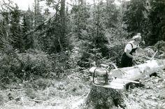 https://lokalhistoriewiki.no/images/Motorsag_kvinne_borker.jpg