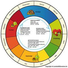 Schaubild zur Überwinterung von Griechischen Landschildkröten