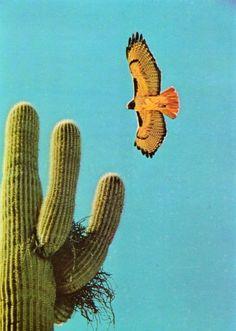 cactus with nest & desert bird Desert Dream, Desert Life, Agaves, Cacti And Succulents, Cactus Plants, Indoor Cactus, Cactus Art, Collage, Thelma Et Louise