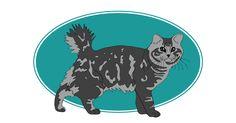 Le 1er American Bobtail a vu le jour grâce à 2 croisements. Le premier était celui d'un chat à courte queue et une siamoise. C'est ce 1er croisement qui a été de nouveau accouplé à un Persan crème et à donné naissance à l'American Bobtail. Il est intelligent et garde un esprit chasseur. #chat #cat #americanbobtail. Pour plus d'informations, rendez-vous sur http://www.assuropoil.fr/races-de-chats