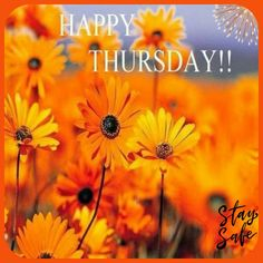Happy Thursday Images, Thursday Greetings, Good Morning Happy Thursday, Happy Thursday Quotes, Good Morning Thursday, Good Morning Greetings, Good Morning Wishes, Good Morning Quotes, Nice Good Morning Images