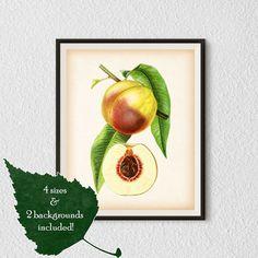 Kitchen poster, Kitchen prints, Fruit print, Fruit poster, Wall art kitchen, Peach, Botanical Art, Antique print, Digital download print #36