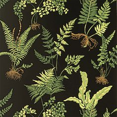 Ferns Wallpaper in Black by @Thibaut Wallpaper  this is gorgeous in person.  must use somewhere!  mud room?