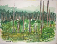 Cook Forest original water color with mixed media by printsnat