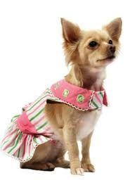 dogs fashion apparel