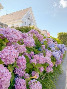 Cape Cod Hydrangea Season: When to Go Hydrangea Season, Landscape Design, Garden Design, Flower Aesthetic, Spring Aesthetic, Landscaping With Rocks, Summer Garden, Summer Fun, Nantucket